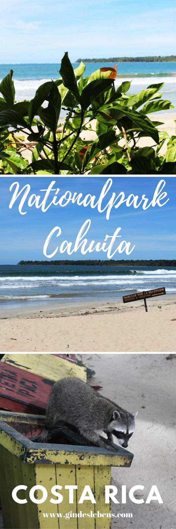 Nationalpark Cahuita – wir wurden beklaut! Im Nationalpark Cahuita wurden wir zum ersten Mal im Urlaub beklaut! Unser Besuch im Nationalpark hatte aber auch schöne Erlebnisse zu bieten und wir konnten endlich im Meer baden. Cahuita ist der zweitälteste Nationalpark des Landes und umfasst etwas mehr als einen Hektar Fläche. Der Nationalpark befindet sich 15km nördlich von Puerto Viejo de Talamanca. Die Region um den Nationalpark wurde 1991 von einem Erdbeben erschüttert, bei dem wohl ein Teil…
