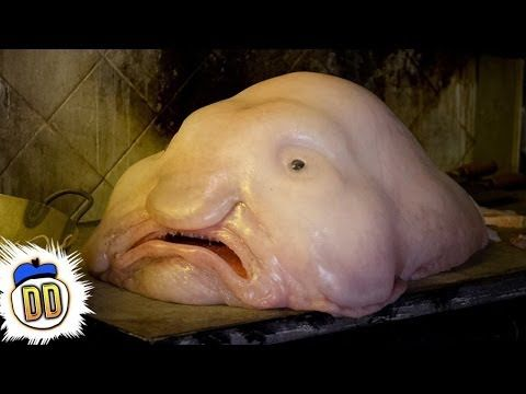 Blobfish... how in the f*ck do these even exist!? to have such a human face...just wtf