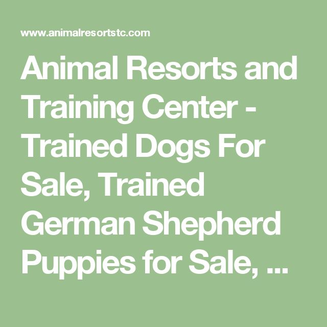 Animal Resorts and Training Center - Trained Dogs For Sale, Trained German Shepherd Puppies for Sale, Protection Dogs For Sale, Family Protection Dogs for sale, Family dogs for sale, Doberman Pinschers for sale, Doberman Pinscher puppies for sale