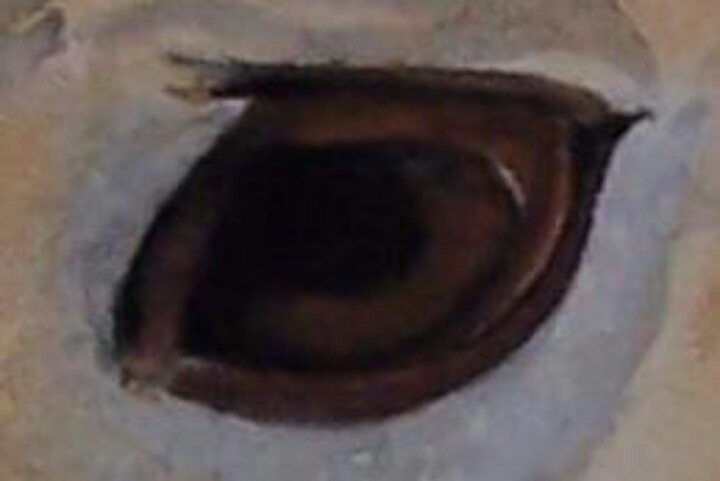 Step 4 eye