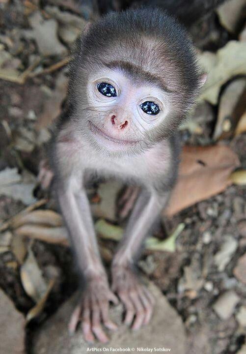 love animals monkey in - photo #5