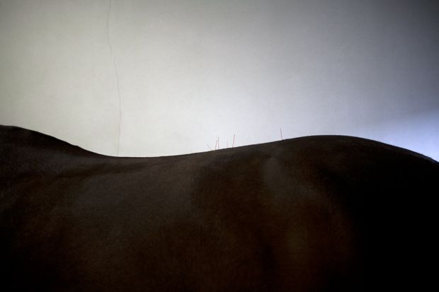 """Who knew horse acupuncture could be so beautiful? (""""Rodinde"""" by Marije Kuiper)"""