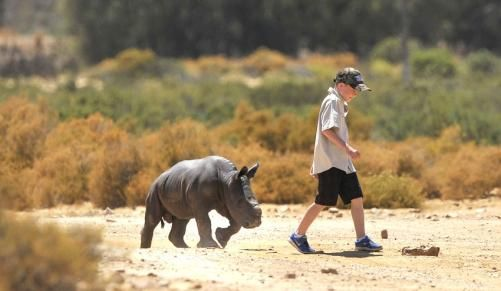 Boy starts fund to save baby rhino - Dailynews | IOL | Breaking News | South Africa News | World News | Sport | Business | Entertainment | IOL.co.za