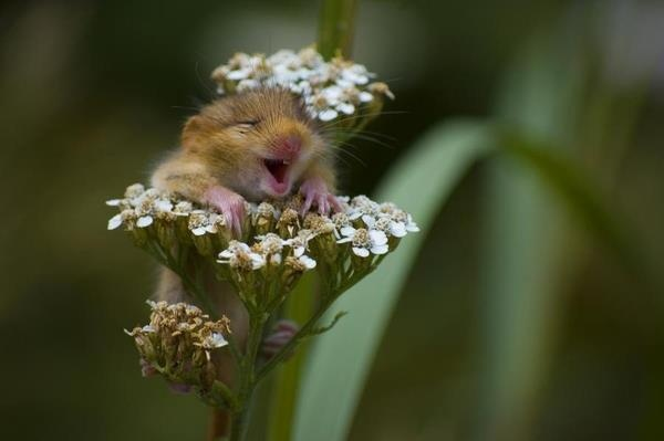 very happy little mouse