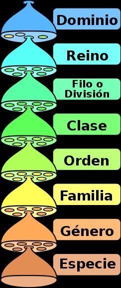 clasificacion taxonomica
