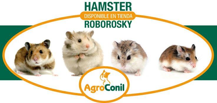 HAMSTER ROBOROSKY.