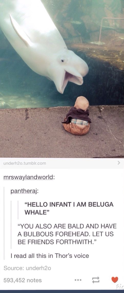 Offensive to my darling Beluga. Save the whales