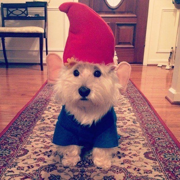 Un enanito de jardin. | 27 Disfraces de Halloween extremadamente ingeniosos para tu perro