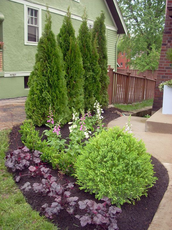 landscaping with evergreens