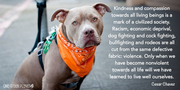http://www.onegreenplanet.org/animalsandnature/quotes-that-will-inspire-you-to-fight-for-animals/