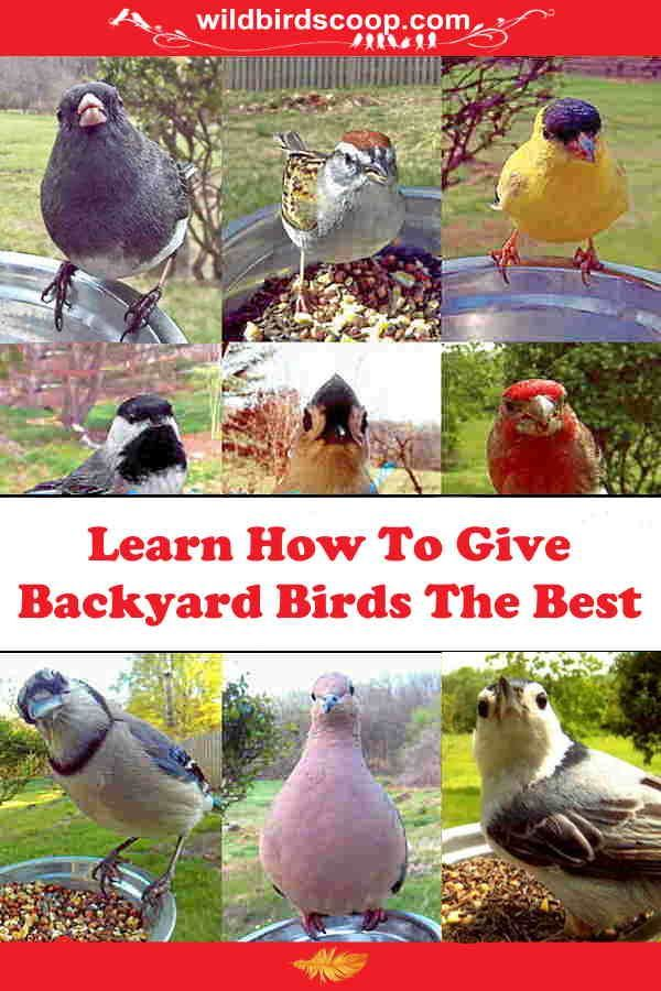 Learning how to attract backyard birds by giving them what ...