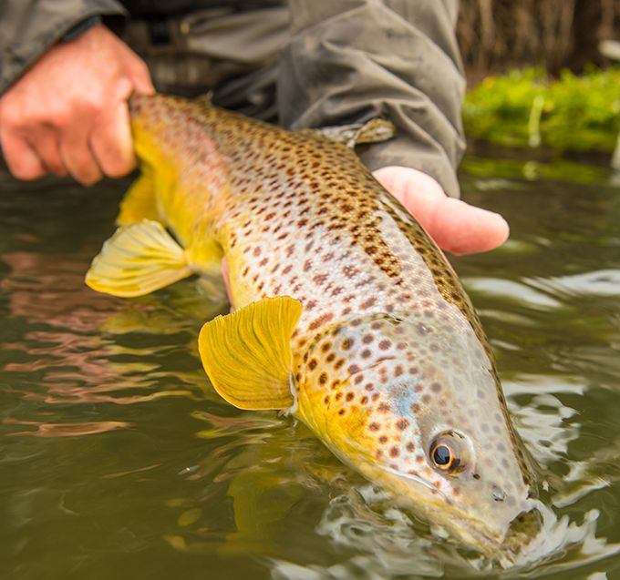17 best images about trout on pinterest | trout fishing tips, Fly Fishing Bait