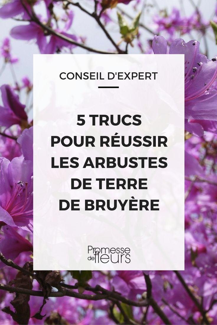 Les 25 Meilleures Id Es De La Cat Gorie Fleurs De Bruy Re