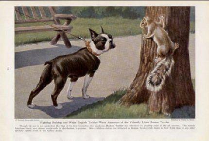 Vintage Boston Pic: French Bulldogs, Vintage Boston, Boston Terriers, Boston Art, Animal