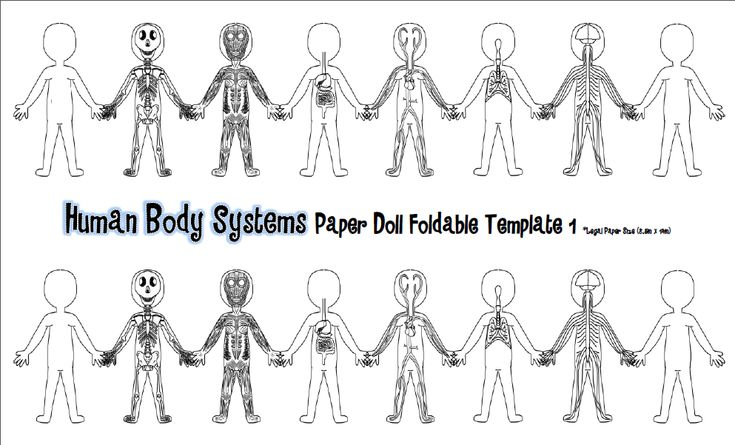 Tangled With Teaching: Hooray For The Humans! {Human Body