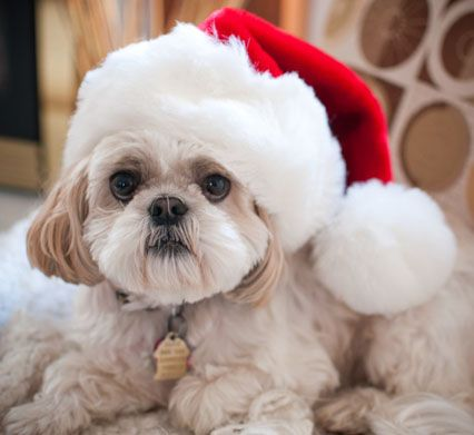 Tips to keep your pets safe at Christmas