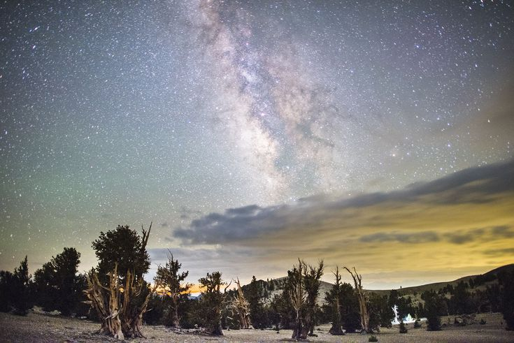 A night under the stars with the world's oldest trees
