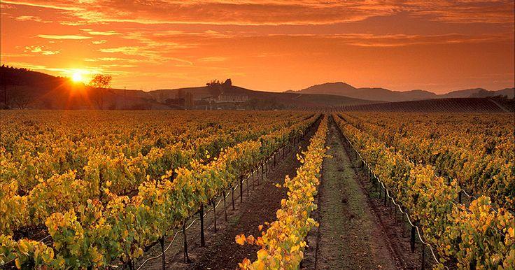 ДЕНЬ 9: ДОЛИНА НАПА Сегодня мы приезжаем в Долину Напа, известную своими виноградниками, где вы сможете продегустировать лучшие вина знаменитых калифорнийских виноделен.