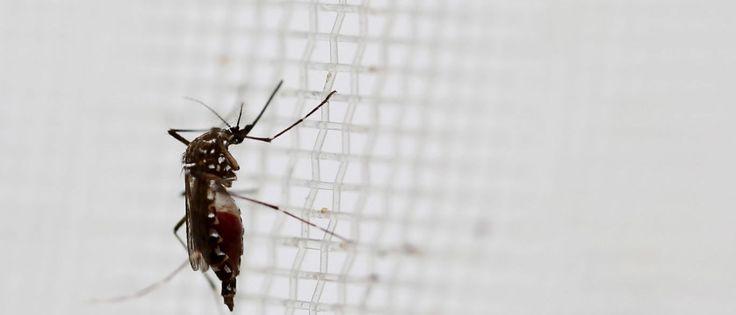 InfoNavWeb                       Informação, Notícias,Videos, Diversão, Games e Tecnologia.  : Veículos de combate ao Aedes estão abandonados no ...
