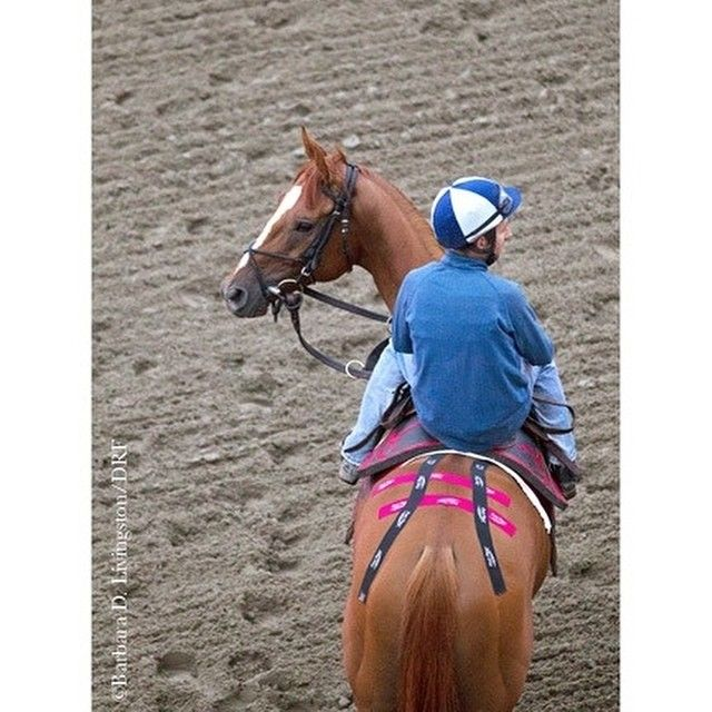 Best Animal Taping Images On   Horses Horse Stuff