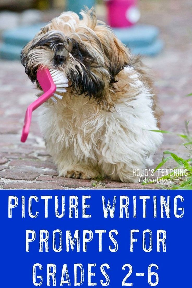 Funny Picture Writing Prompts | Writing prompts 2nd grade ...