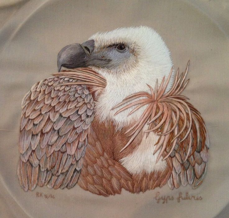 Eurasian Griffon Vulture completed