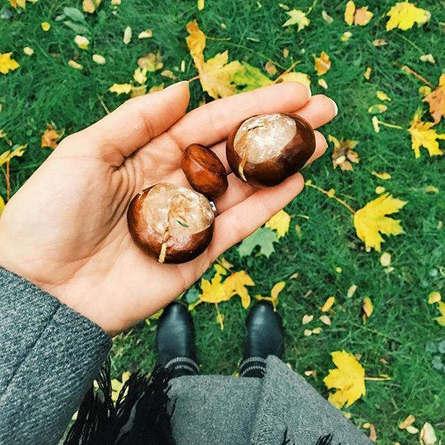 Ta pravá značka podzimu// The real sign of autumn   #chestnut #autumn #leaves #fallen #fall #fashion #vysehrad #stroll #czechgirl #nature #lover #blogger #photography