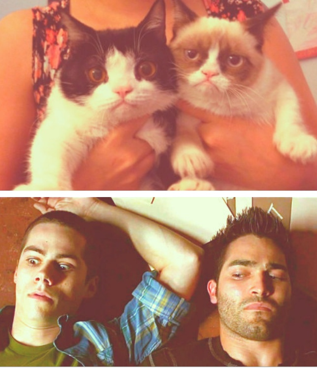 Sterek and The Grumpy Sisters; cats and sterek!!! my life is complete now!