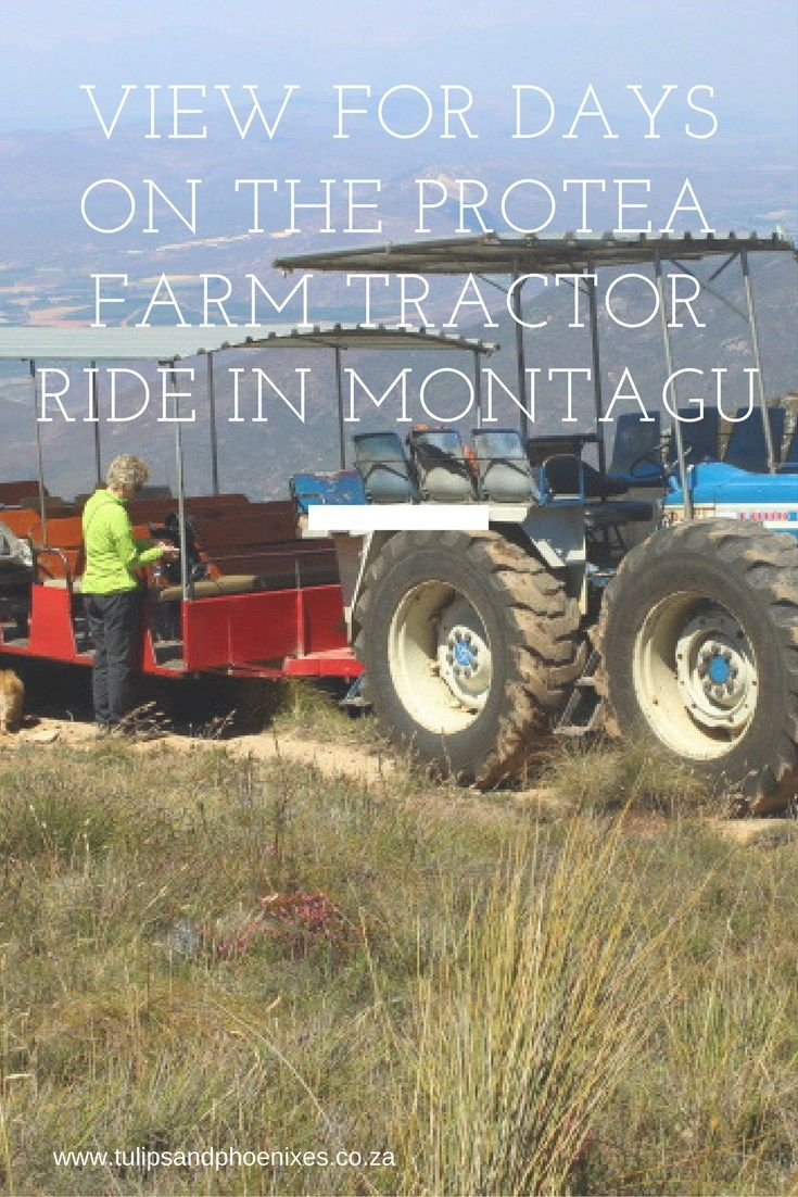 You don't get a more authentic South African experience than a tractor ride and a potjiekos lunch. The Protea Farm just outside the town of Montagu in the Western Cape offers both a 1500m above sea level tractor ride and a potjiekos lunch. Click to read more about this South African bucket list activity!
