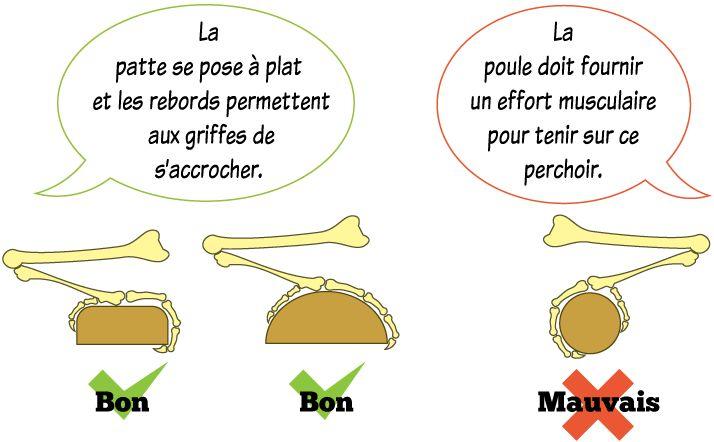 Installer-un-perchoir-pour-les-poules-forme-dimensions-plan-poulailler-gallinette