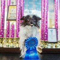 World's Ugliest Dog Winner for 2014: Photos : DNews