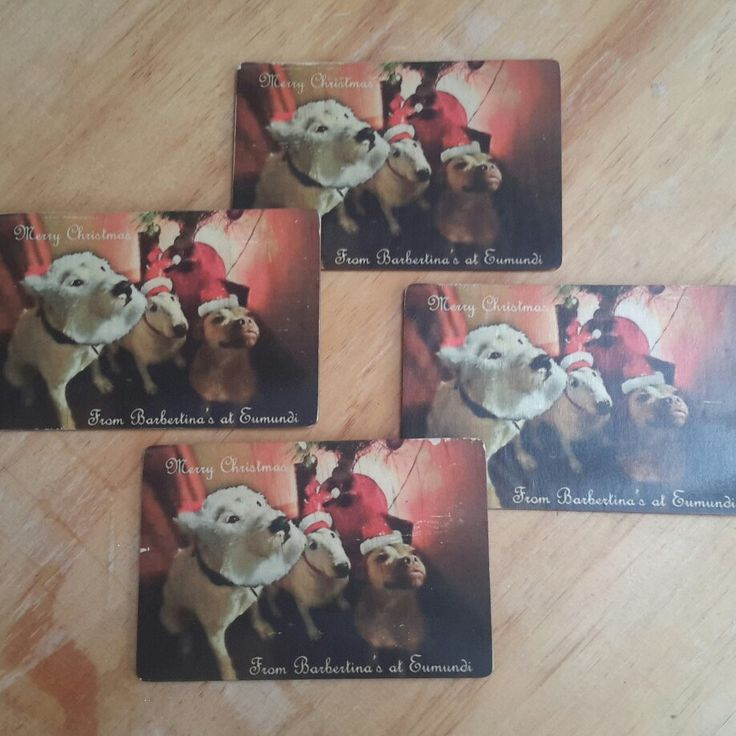 Plywood Postcard Christmas Cards! Hurry and get your order in so you can send yours in time for Christmas 😀