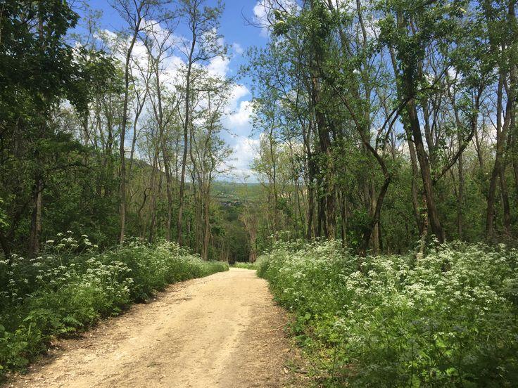 Szuper kerékpáros utak a pilisi erdőben - Kezdj élni!