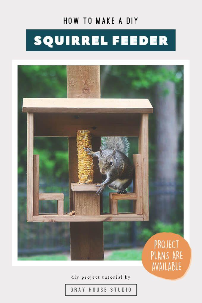 Squirrel Feeder Diy In 2020 Squirrel Feeder Diy Squirrel Feeder Squirrel