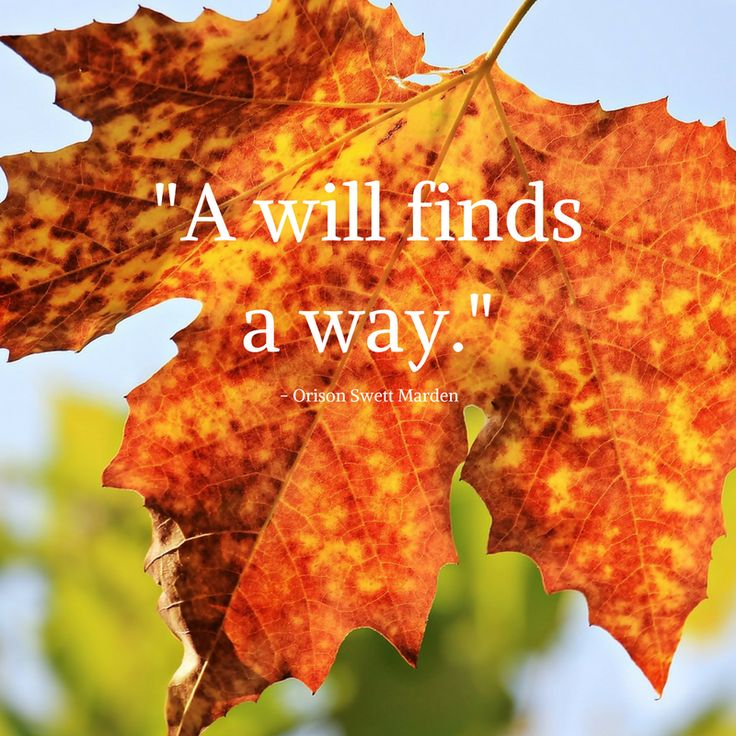 """A will finds a way."" Orison Swett Marden"