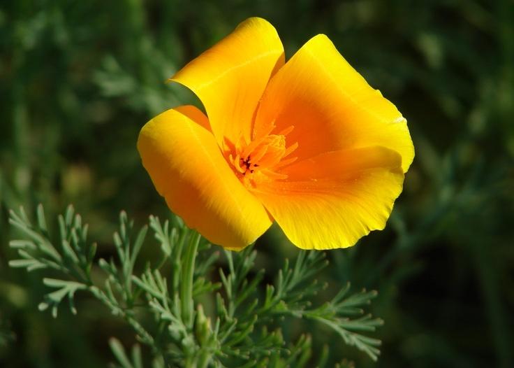 Top 25 ideas about flores preciosas on pinterest satin tela and photos - Fotos flores preciosas ...