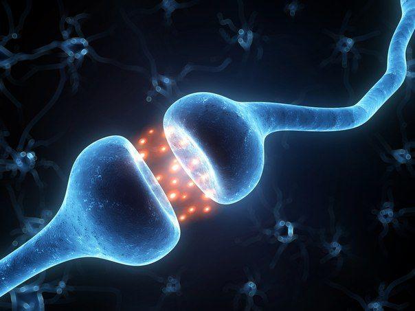 25 простых способов стать умнее Ученые из Университета Виргинии выяснили, что уже к 27 годам в работе мозга начинаются перебои, к 37 — существенно ухудшается память. Дальше мы читать не стали, боясь упустить драгоценное время. В этой статье собрано все необходимое для экстренного спасения твоего мозга, его поддержания и развития. Отныне на глупый вопрос «Тебе шапка не жмет?» ты будешь отвечать не только пинком в коленную чашечку, но и обоснованным «Теперь — жмет». 1. Больше читай. Чем…