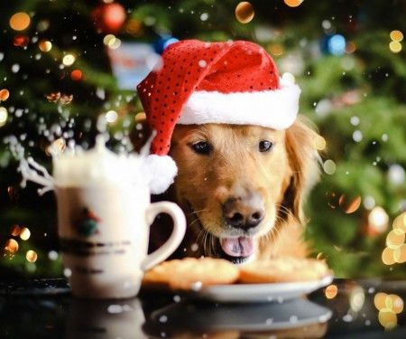 Christmas Dog #pets #cute #animals