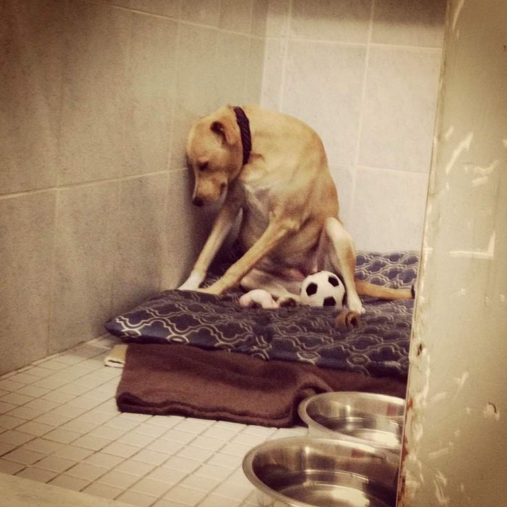 The 'Saddest Dog In The World' Is Homeless Again