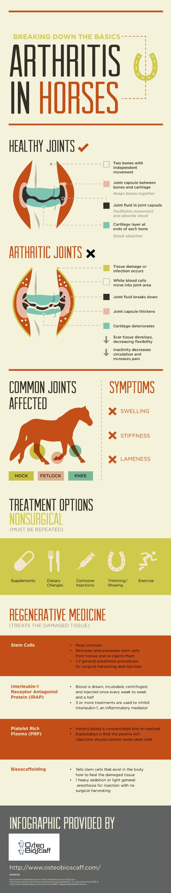 If a horse is suffering from swelling, stiffness, or lameness, he might have equine arthritis. Learn how horses can return to their agile conditions by checking out this infographic about arthritis treatment options. Original source: http://www.osteobioscaff.com/640436/2013/02/06/breaking-down-the-basics-arthritis-in-horses---infographic.html