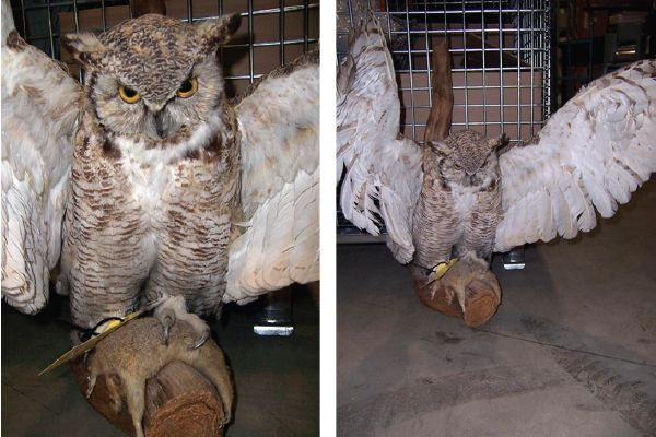 Recognize this owl? If you can prove this item belongs to you, please contact EPSpinterest@edmontonpolice.ca with specific details that identify the item, as well as any form of proof that it belongs to you. Only individuals providing specific information will be contacted.