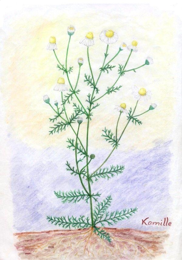 Waldorf ~ 5th grade ~ Botany ~ main lesson book