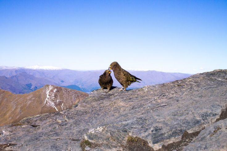 Lovebirds Ben Lomond summit