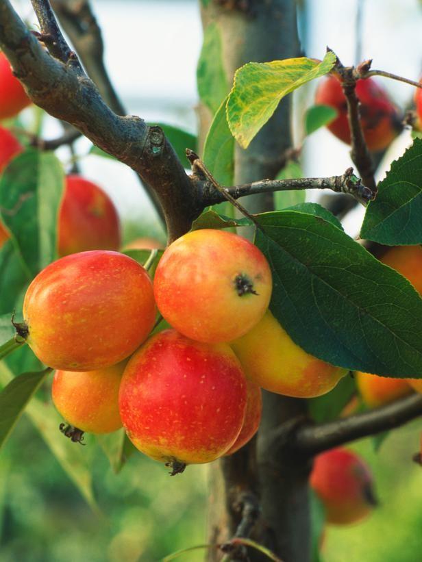 9 Trees for Small Spaces --> http://www.hgtv.com/gardening/trees-for-small-spaces/pictures/index.html?soc=pinterest?soc=pinterest
