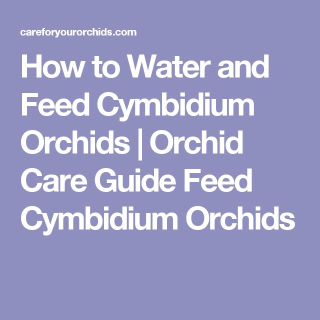 How to Water and Feed Cymbidium Orchids | Orchid Care Guide Feed Cymbidium Orchids