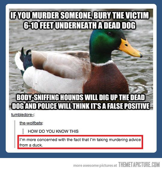 Ducks hide terrible secrets…