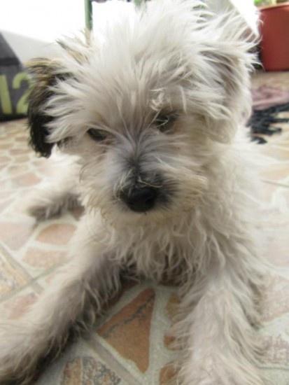 Se llama Perla, tiene tres meses y la recogimos de la Asociación Protectora de Animales en Chuquisaca (Sucre, en Bolivia). Es muy tranquila, juguetona y cariñosa con nosotros.