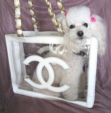 "Fifi ""Poodle in Paradise"" in her favorite Chanel vintage tote bag"