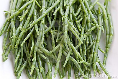 Samphire - Download From Over 56 Million High Quality Stock Photos, Images, Vectors. Sign up for FREE today. Image: 12774148