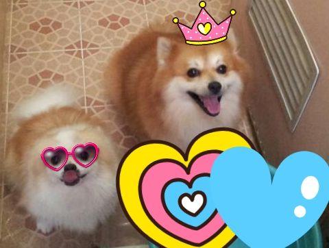 Cara Mensosialisasikan Anjing Kita ~ Tips Info Cara